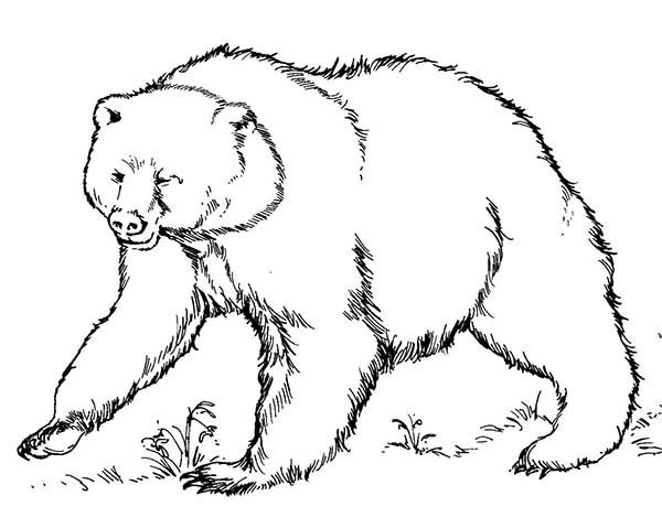 Brown Bear Ready To Fight Coloring Pages | Best Place To ...