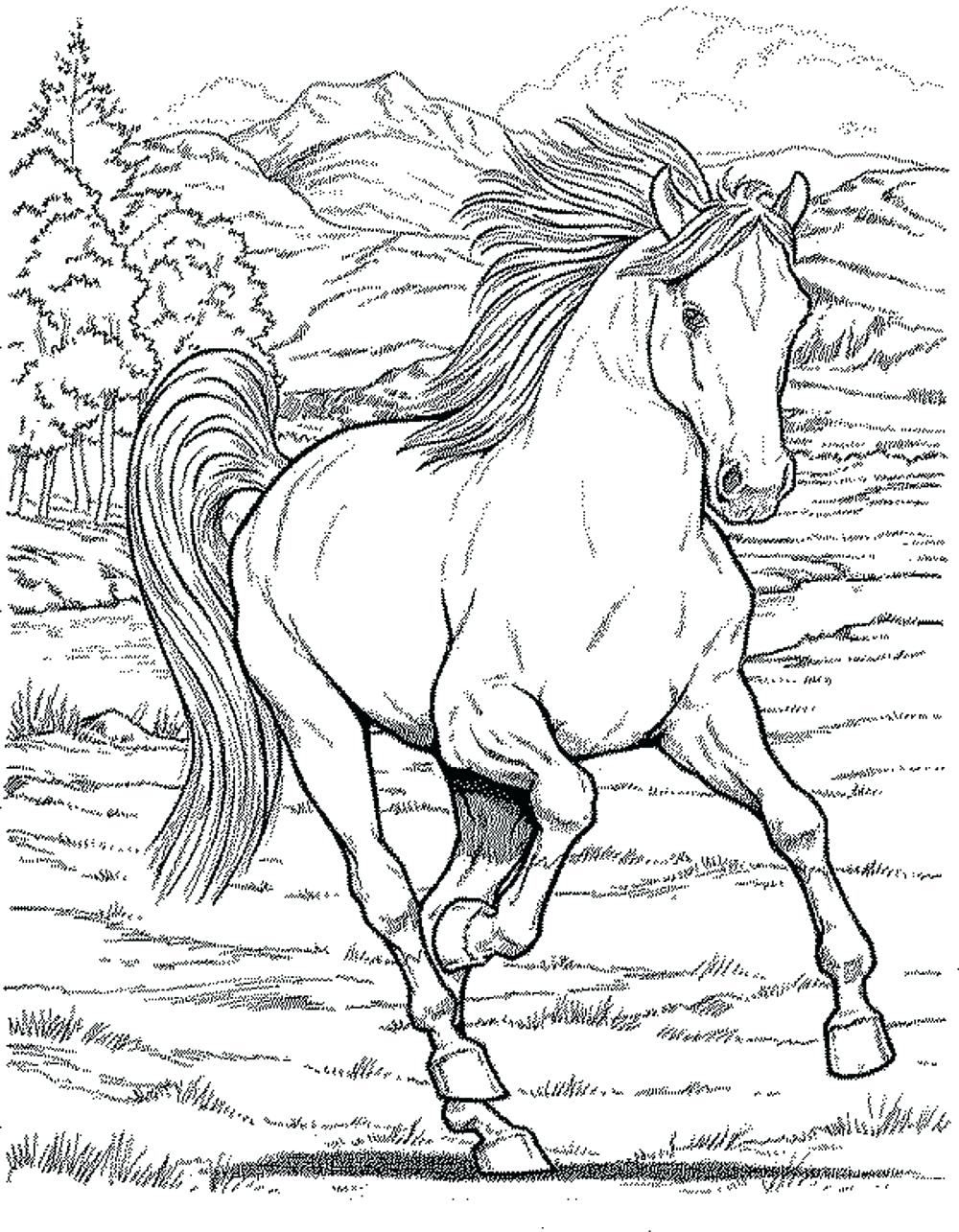 Running Arabian Horse Coloring Pages Printable | 1285x1000
