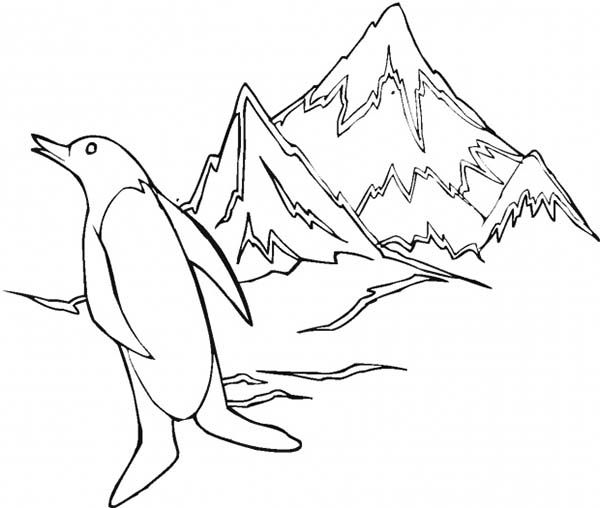 Arctic Animals Penguin At Iceberg Coloring Page Kids Play Color Coloring Home