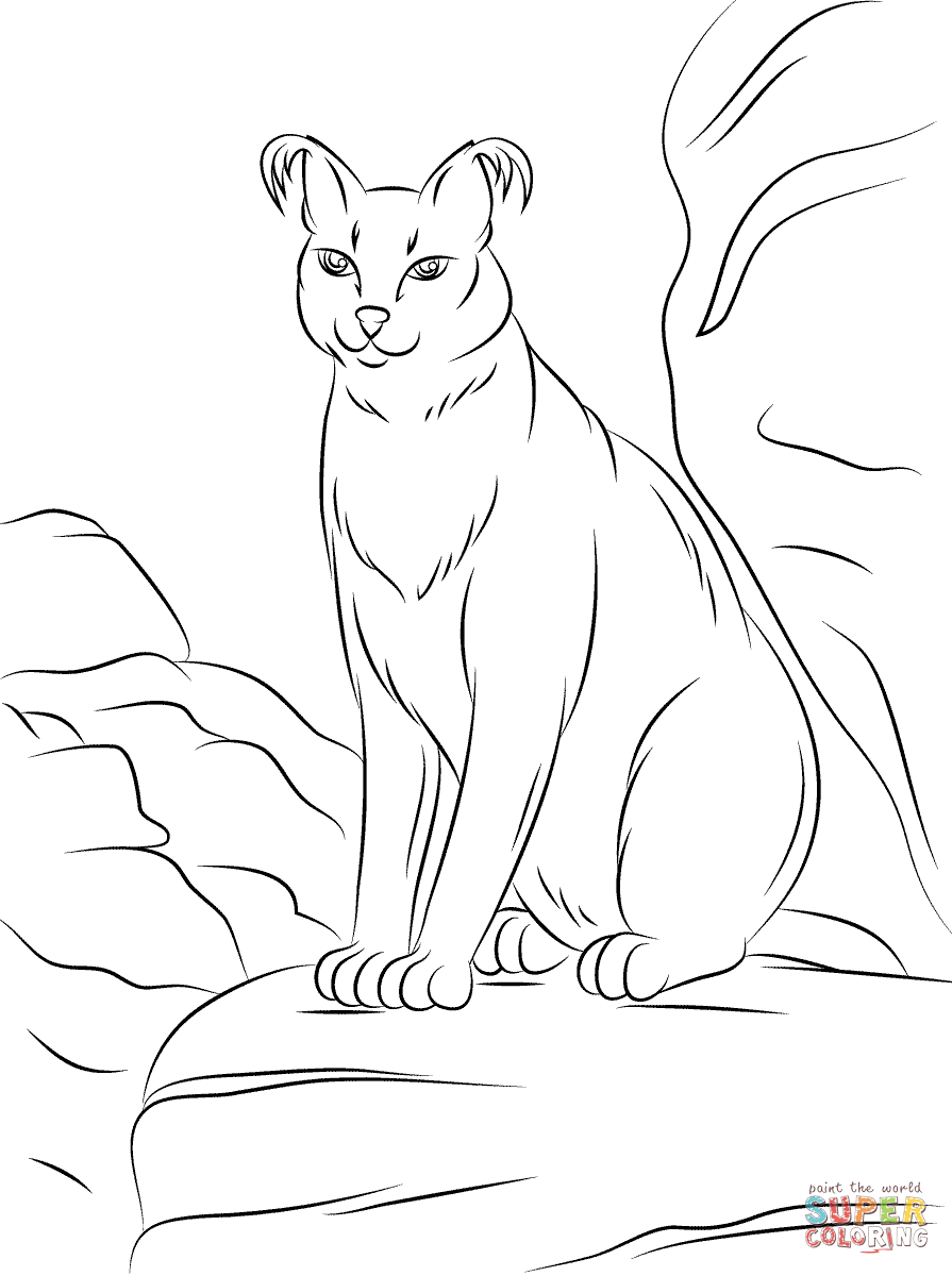 Cute Caracal coloring page | Free Printable Coloring Pages