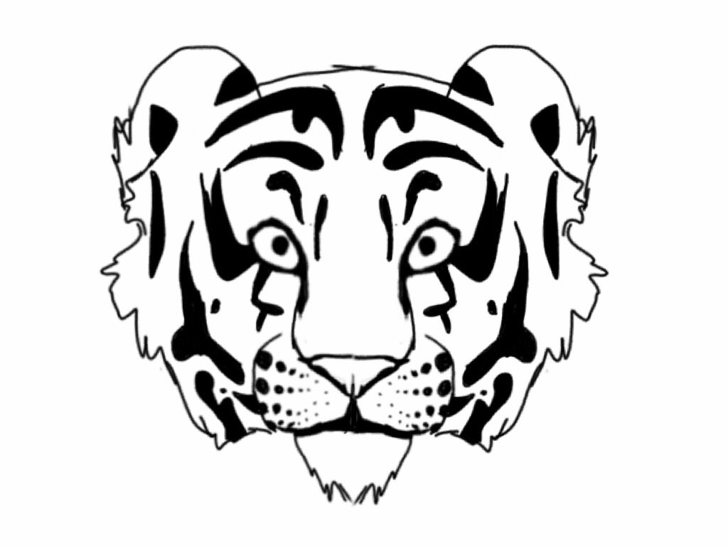 Tiger Outline Coloring Home