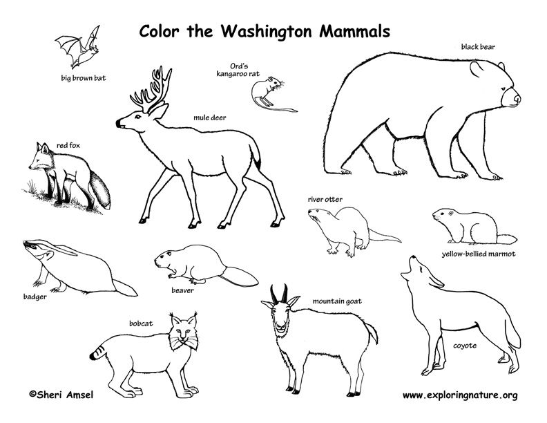 Washington Exploring Nature Educational Resource Woodland Animals Coloring Pages Popular