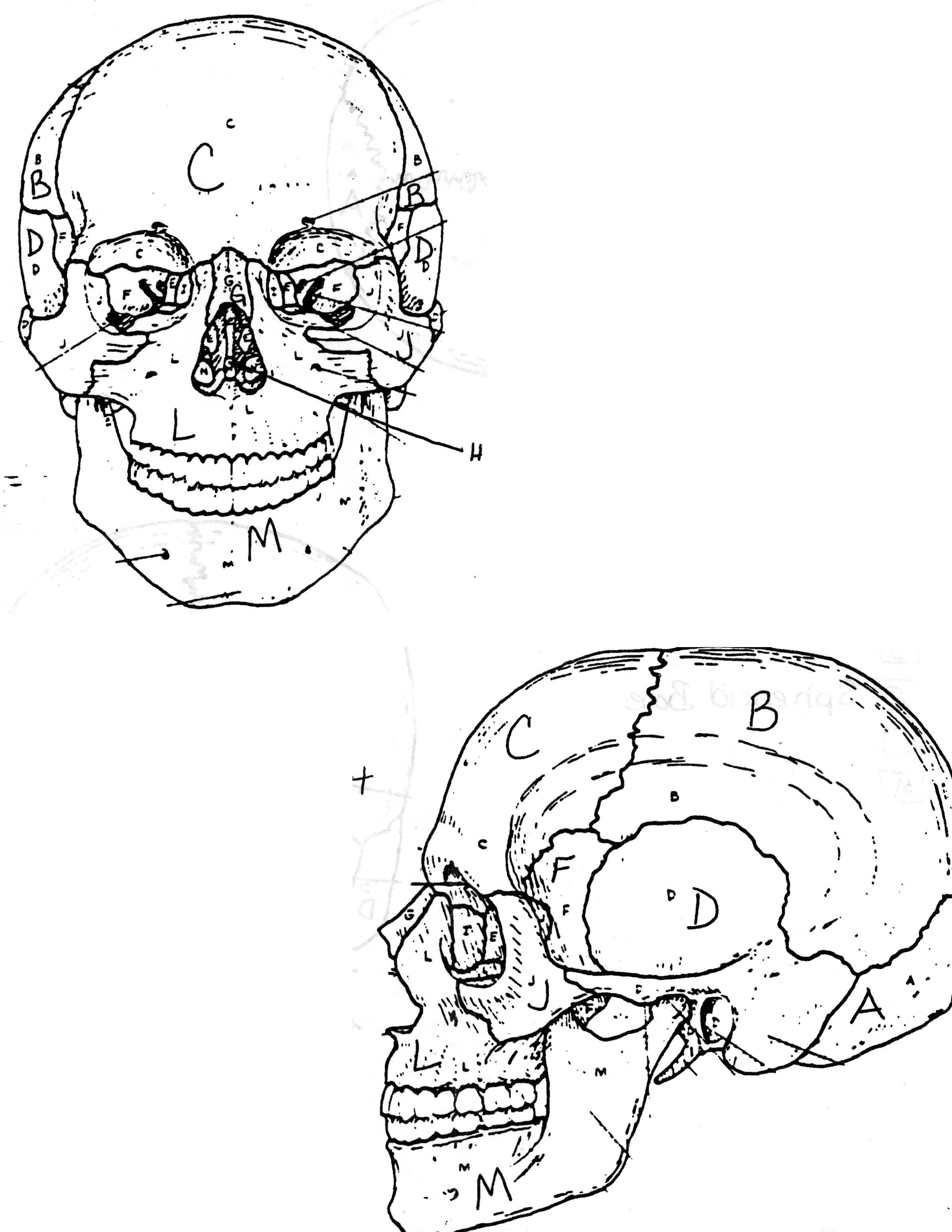 online anatomy coloring pages free - photo#40