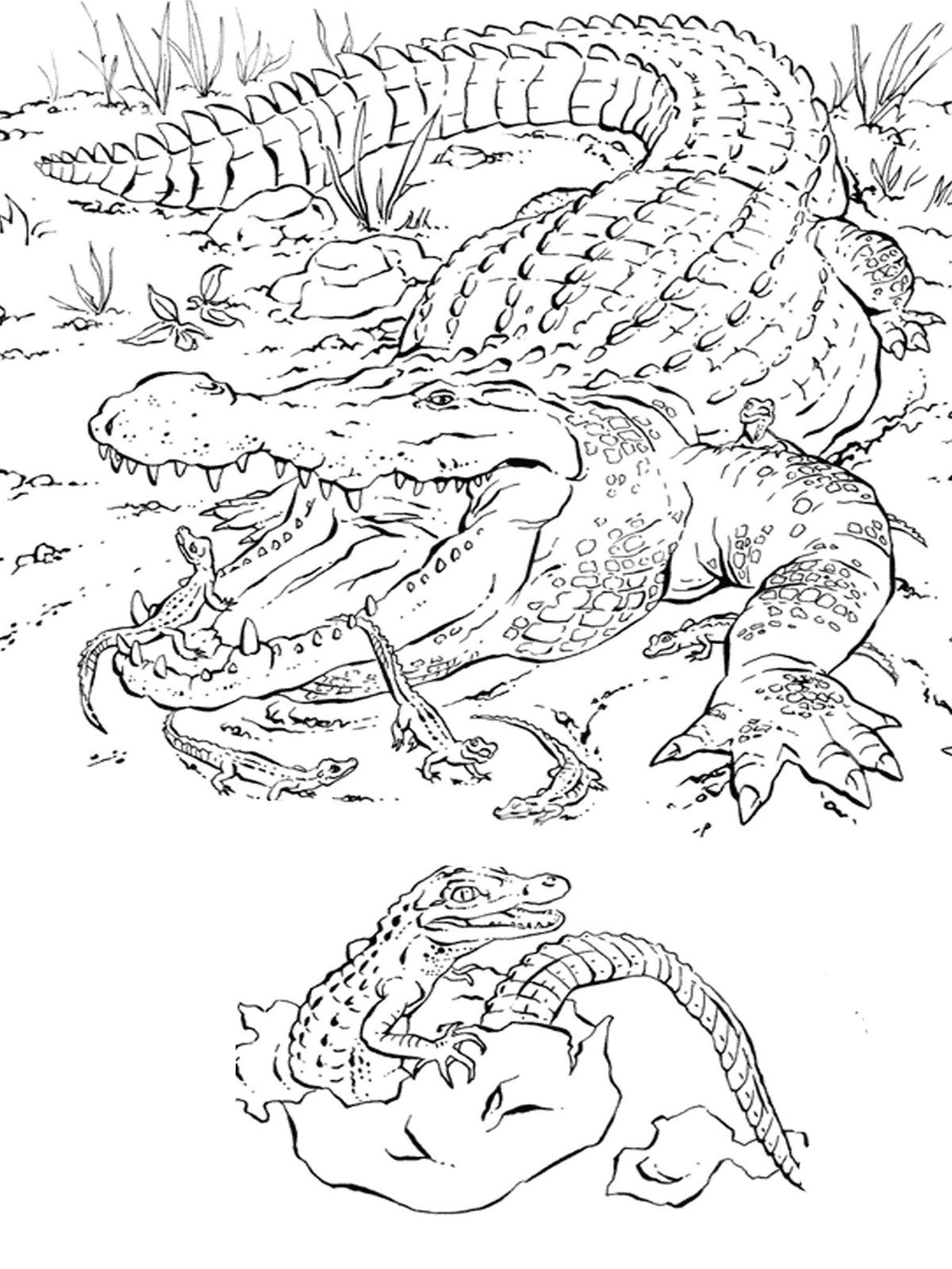 Prairie Animals Coloring Pages - Coloring Home