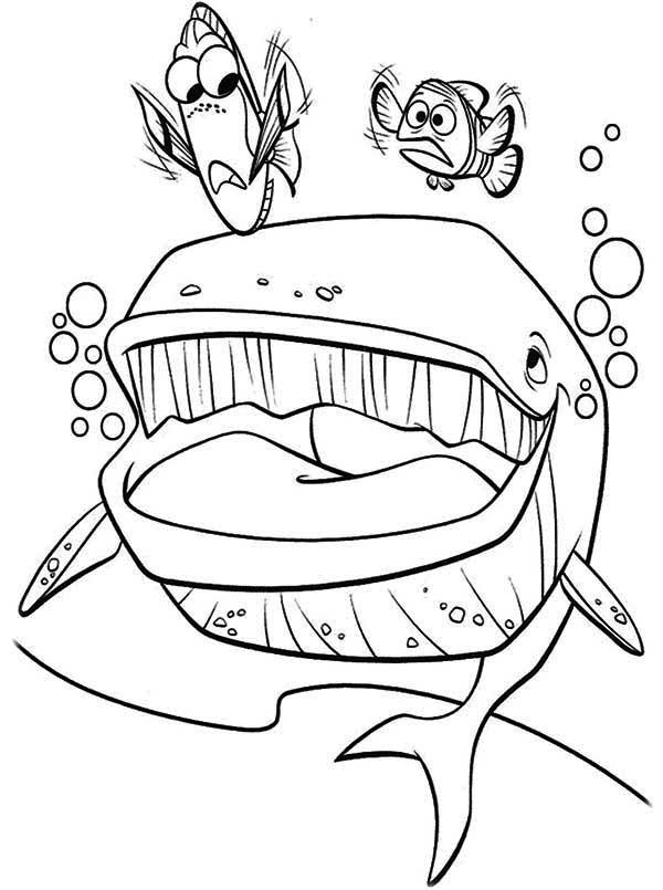 Bruce Finding Nemo Coloring Page - Coloring Home