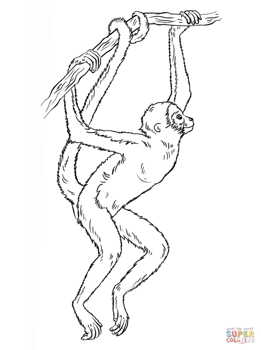 realistic monkey coloring pages coloring home