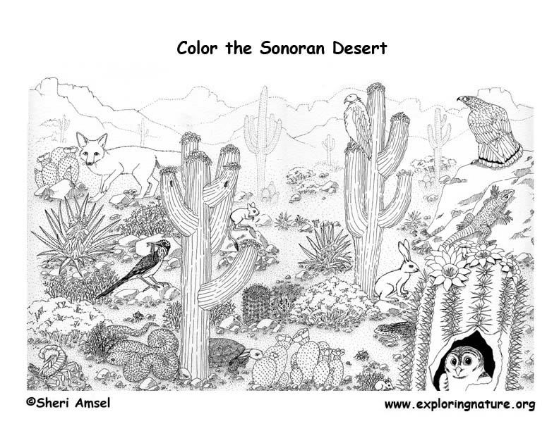 Free Biome Coloring Pages AZ