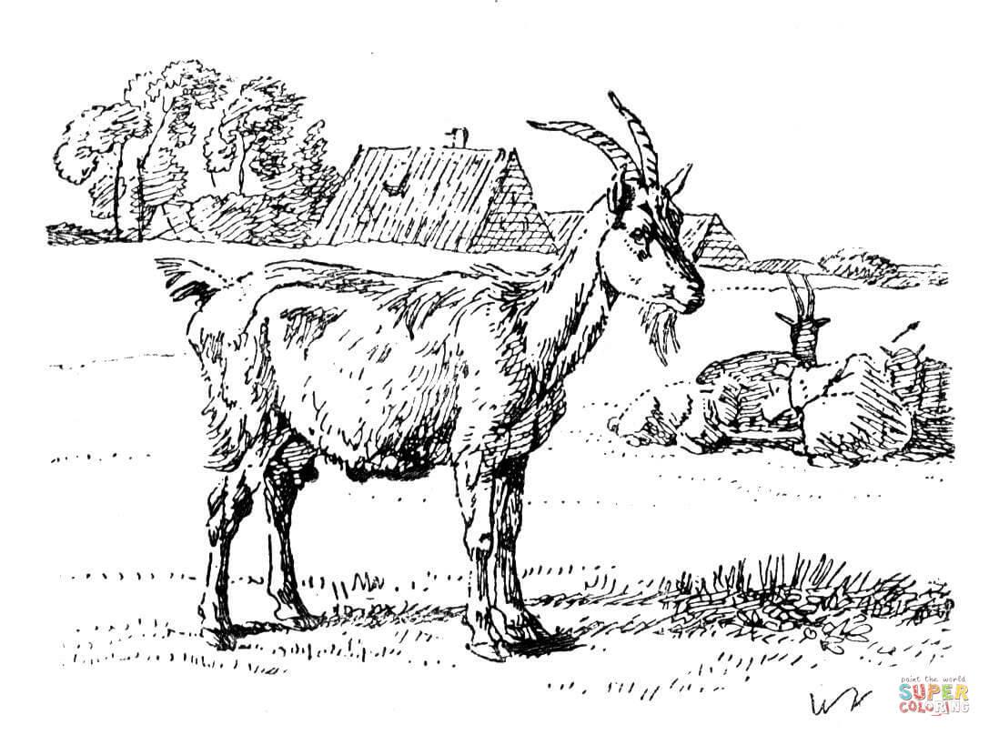 Farm animal coloring page Goat | Baby goats | Målarbok, Bilder ... | 808x1087
