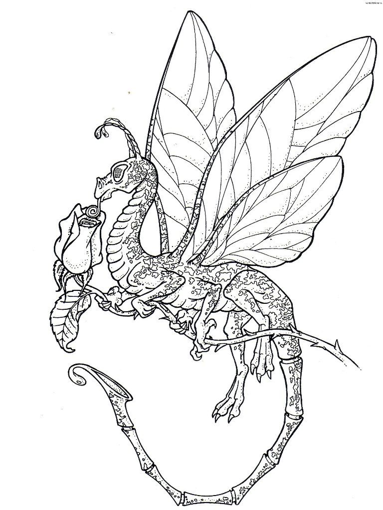 realistic dragon coloring pages - free realistic dragon pics to color and print autos post