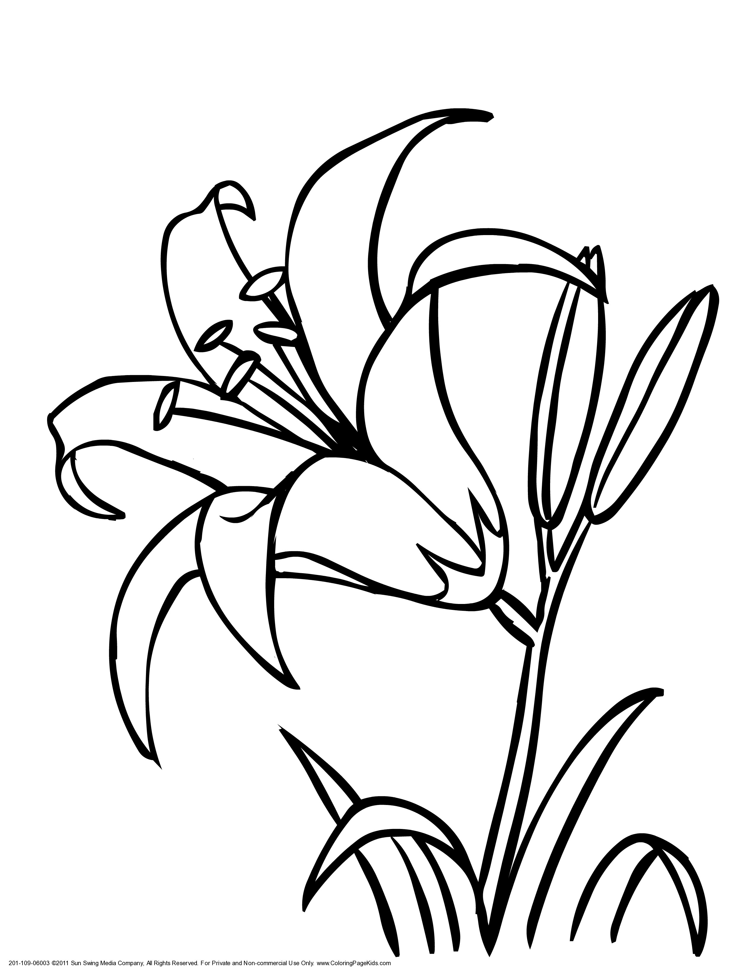 Tiger Lily Coloring Pages Coloring Home