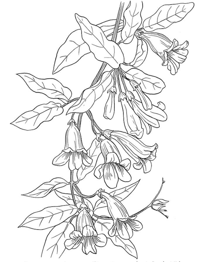 It is a photo of Peaceful Vine Coloring Pages