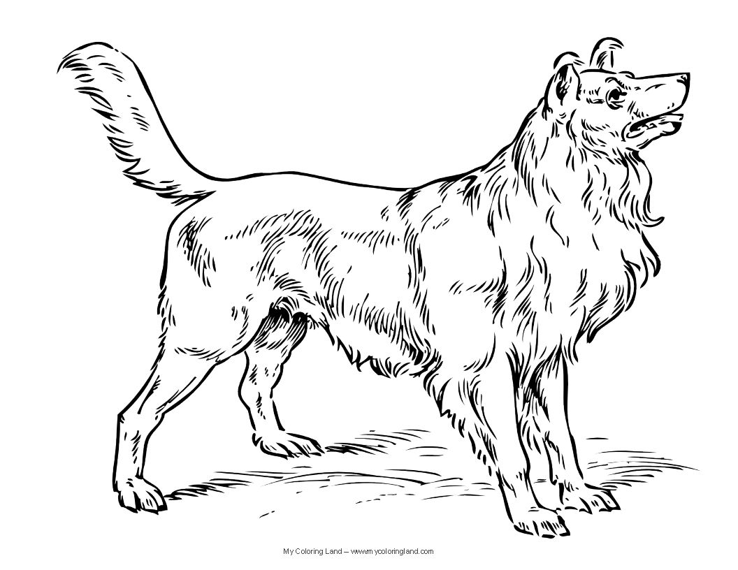 Free coloring pages realistic animals - Free Coloring Pages Dogs And Cats Realistic Puppy Coloring Pages Download And Print For Free