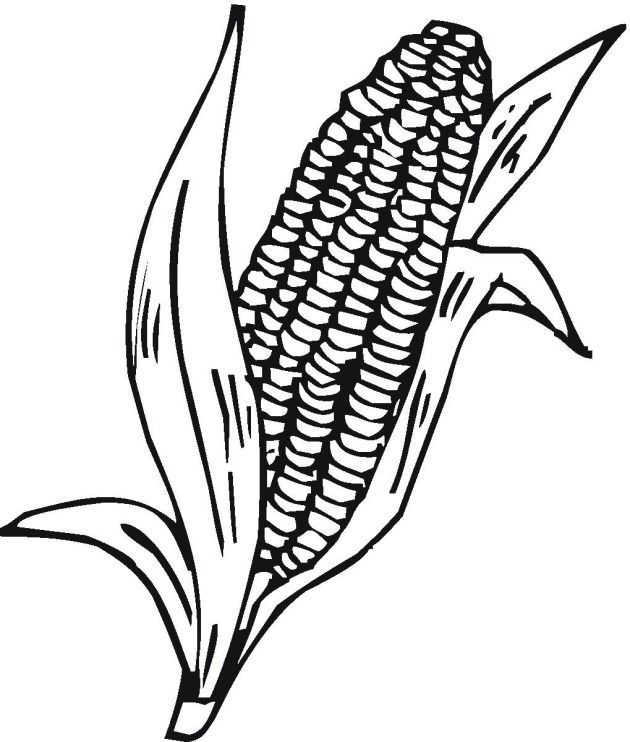 indian corn coloring pages - photo#21
