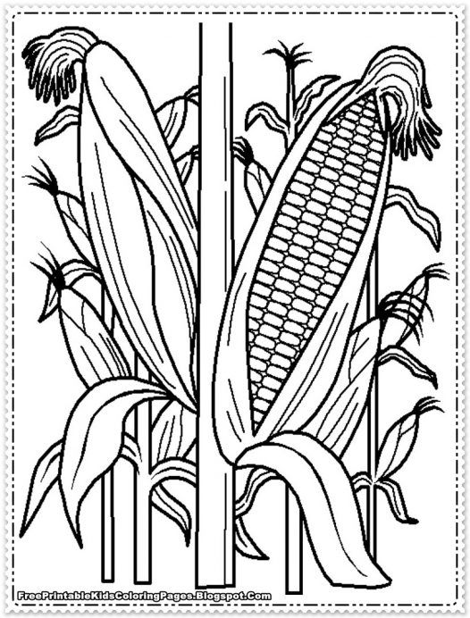 Corn Coloring Pages Printable - Coloring Home