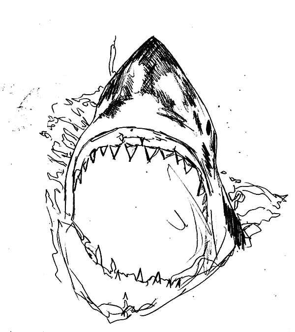 Killer Shark Jaws Coloring Pages : Best Place to Color