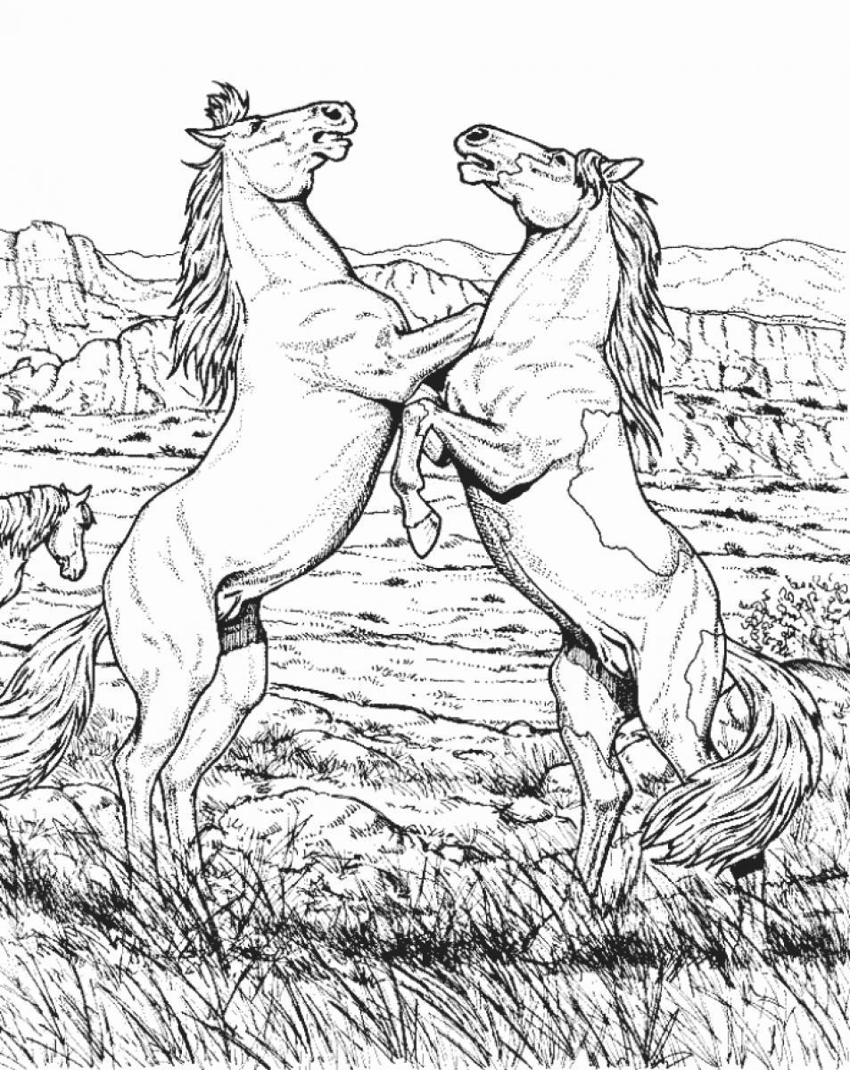 Hard animal coloring pages adults - 7 Pics Of Hard Animal Coloring Pages Cool Adult Coloring Pages