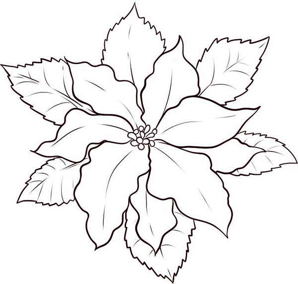 coloring pages and poinsettia - photo#13