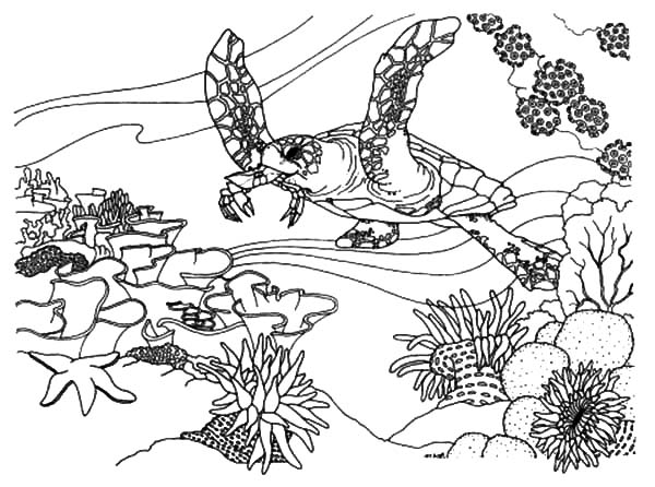 Great barrier reef coloring pages coloring home for Coloring pages of coral reefs
