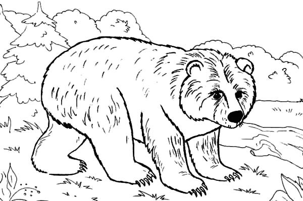 Brown Bear Brown Bear What Do You See Coloring Pages - Coloring