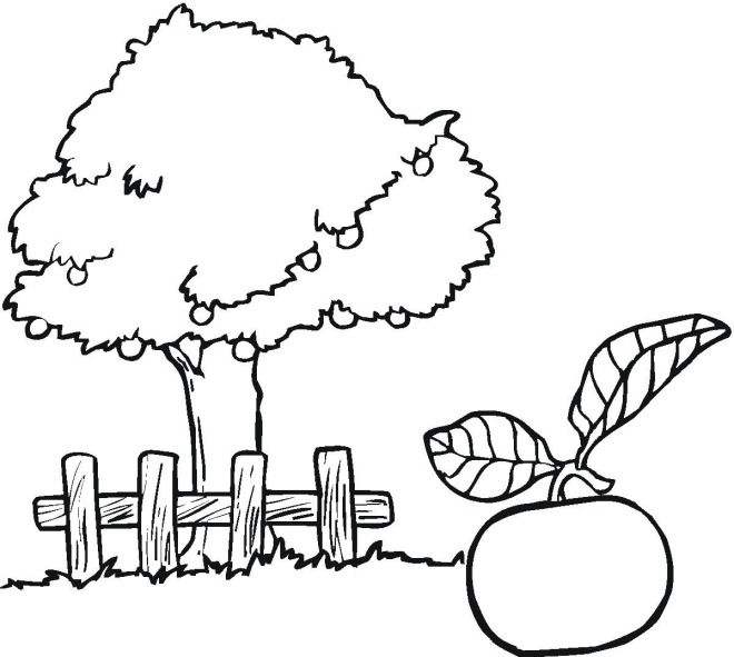 Coloring Book Trees - ClipArt Best