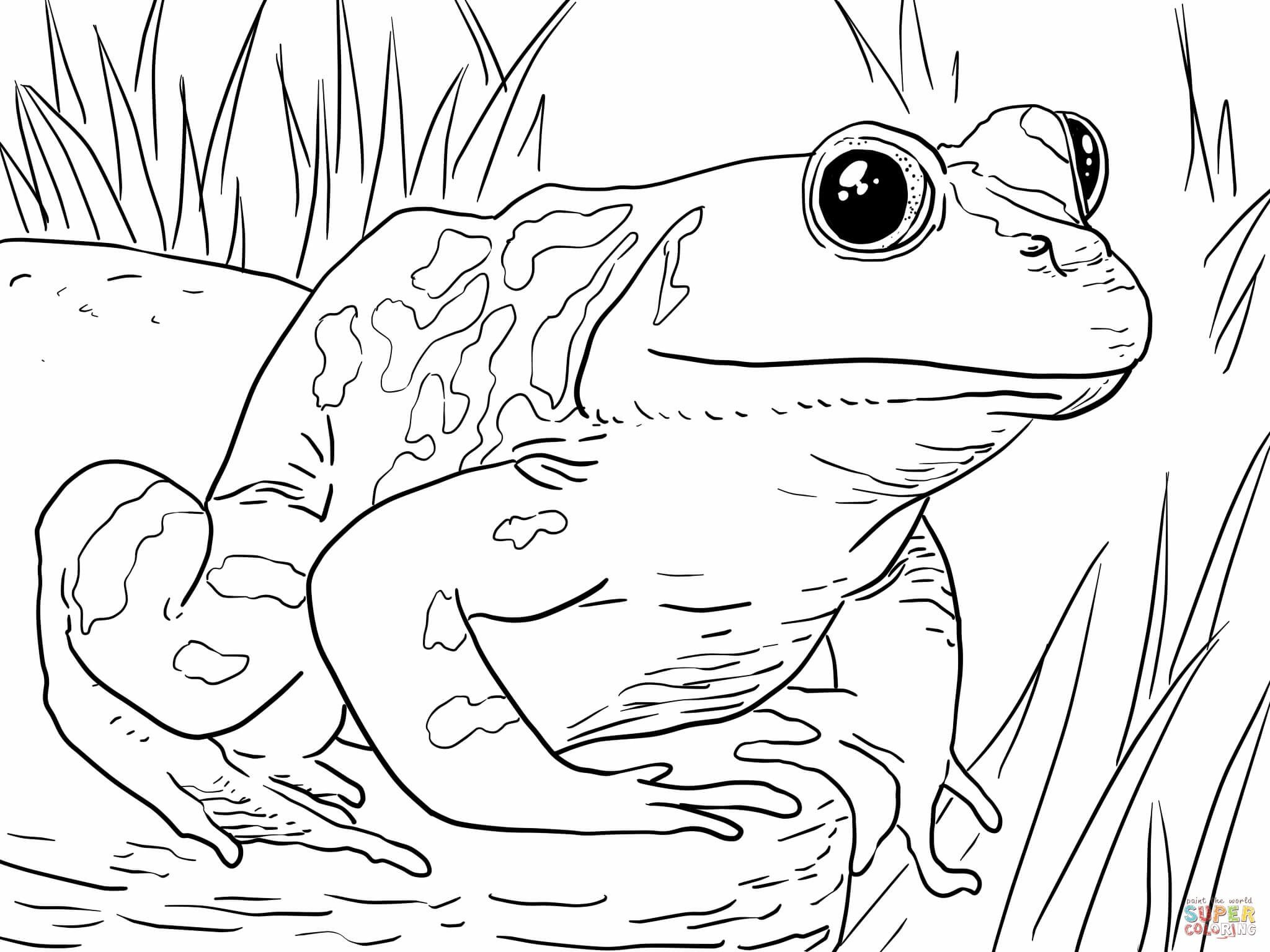 coloring page frog prince coloring pages frog coloring pages of