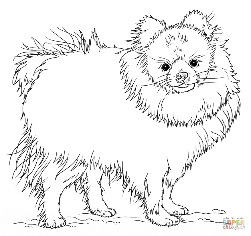 Pomeranian Puppy Coloring Page   Free Printable Coloring Pages ...