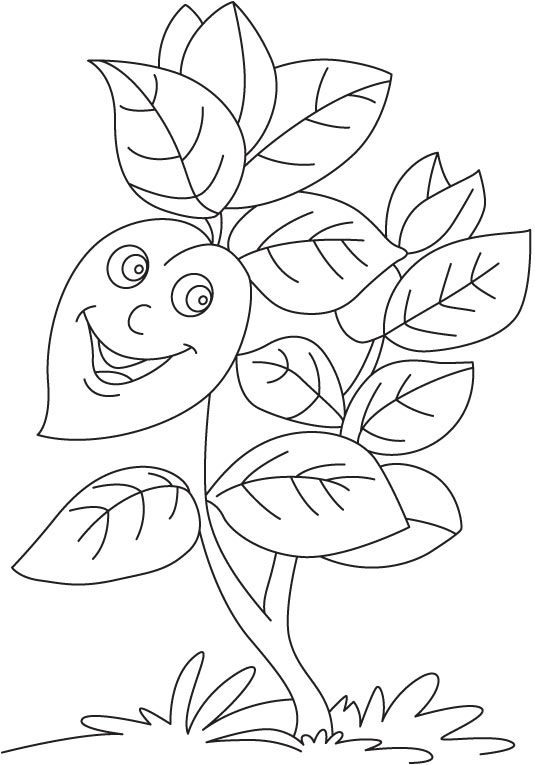 Licorice plant drawing sketch coloring page for Licorice coloring page