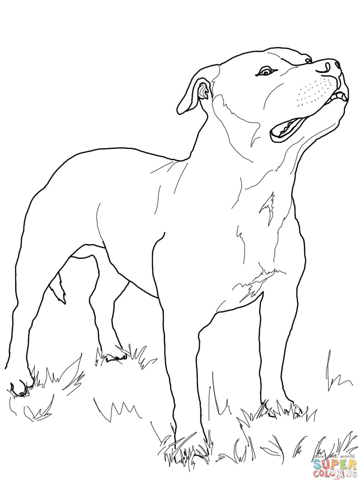 Free coloring pages ferdinand the bull coloring home - Dessin de pitbull ...