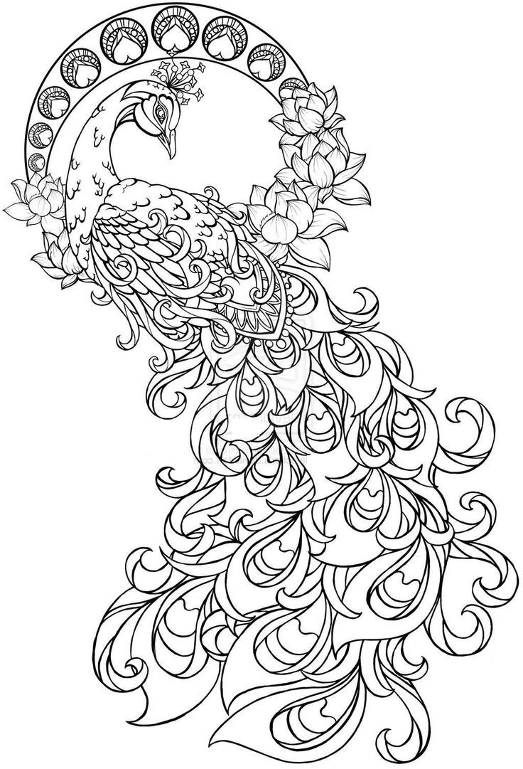 Cool Coloring Pages For Adults Peacock