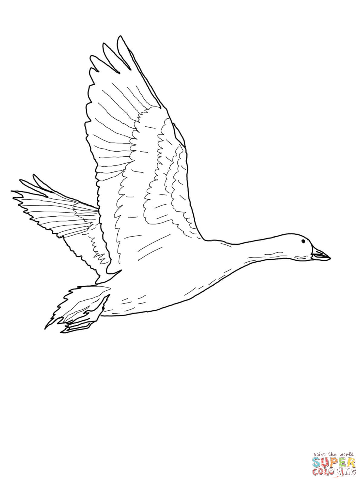 Baby Goose Coloring Page Coloring