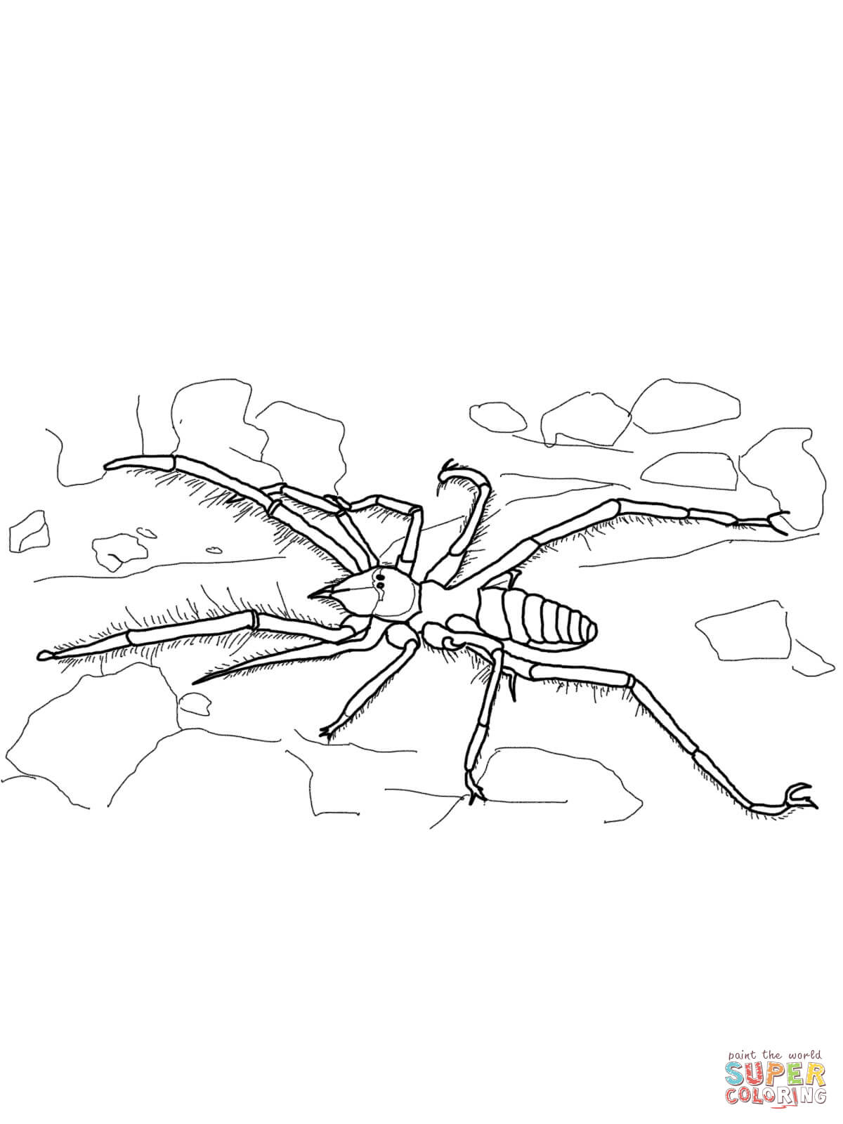 Spiders coloring pages | Free Coloring Pages