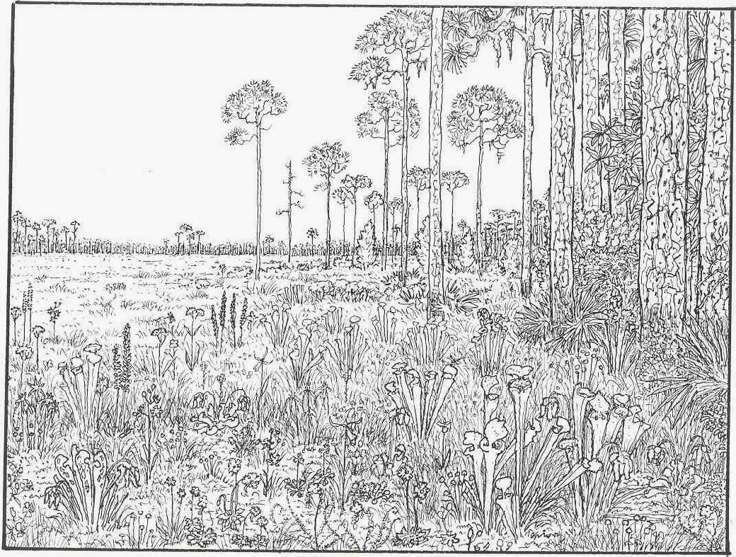 very detailed adult coloring pages - photo#7