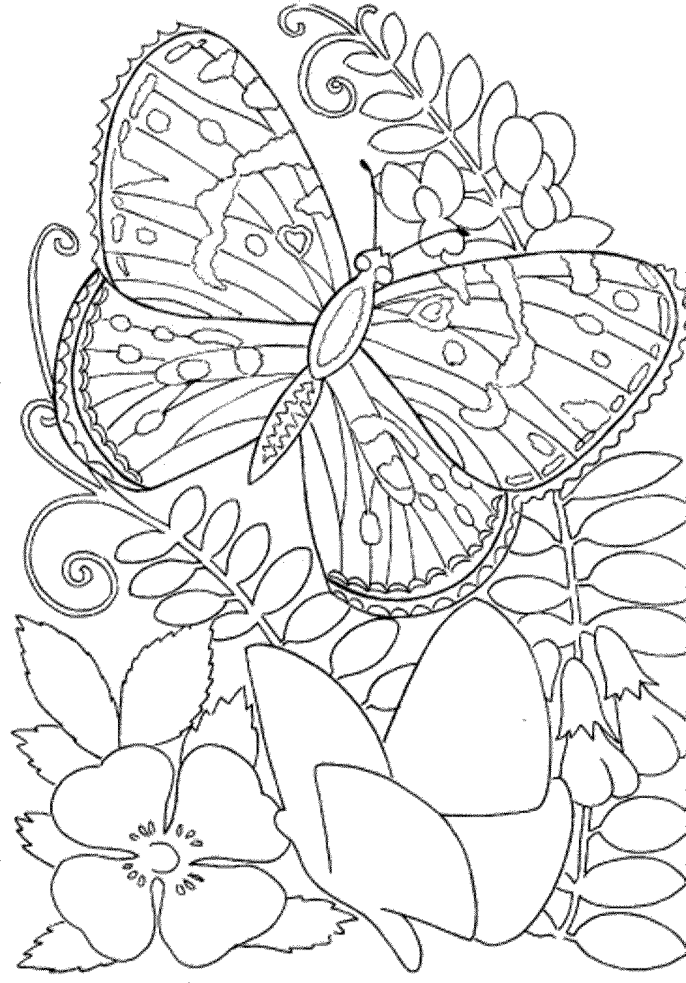 Canny image throughout free printable spring coloring pages for adults