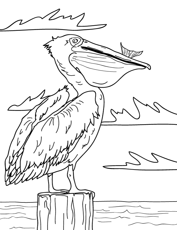 Free printable pelican coloring page. Download it at  https://museprintables.com/download/coloring-page/pelican/ | Pelican art,  Pelican drawing, Art drawings simple