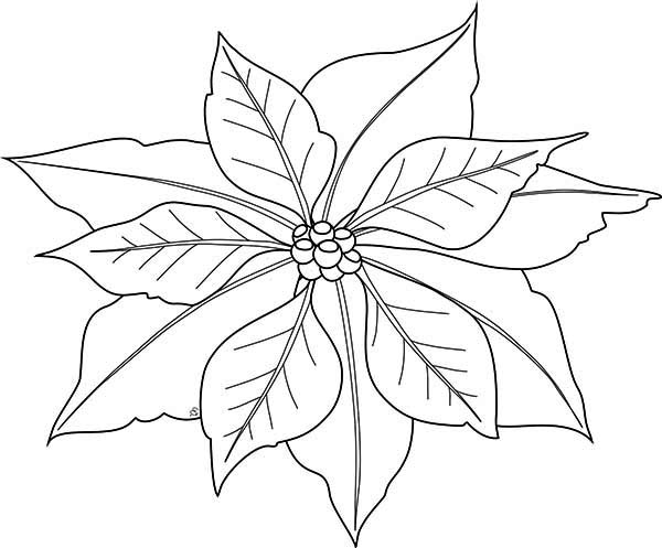 pointsettas coloring pages - photo#36