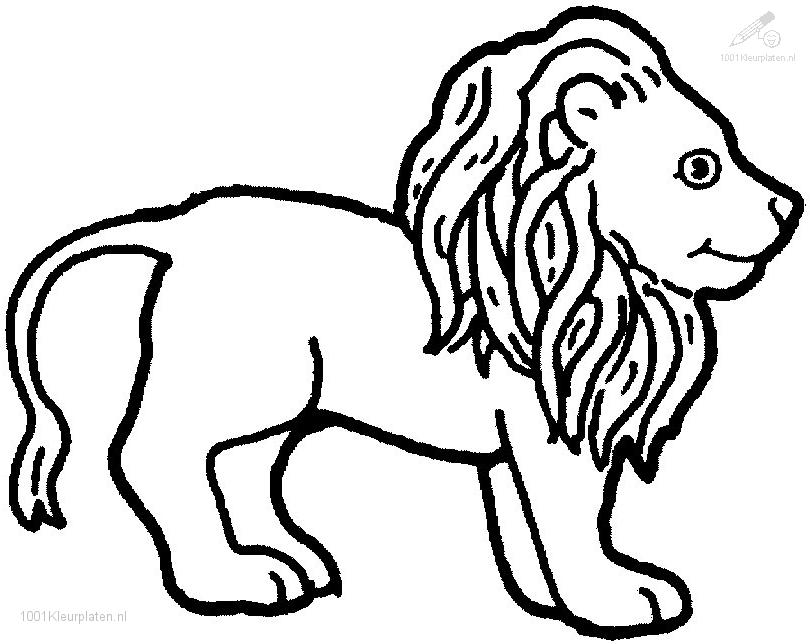 lion growling coloring pages - photo#24