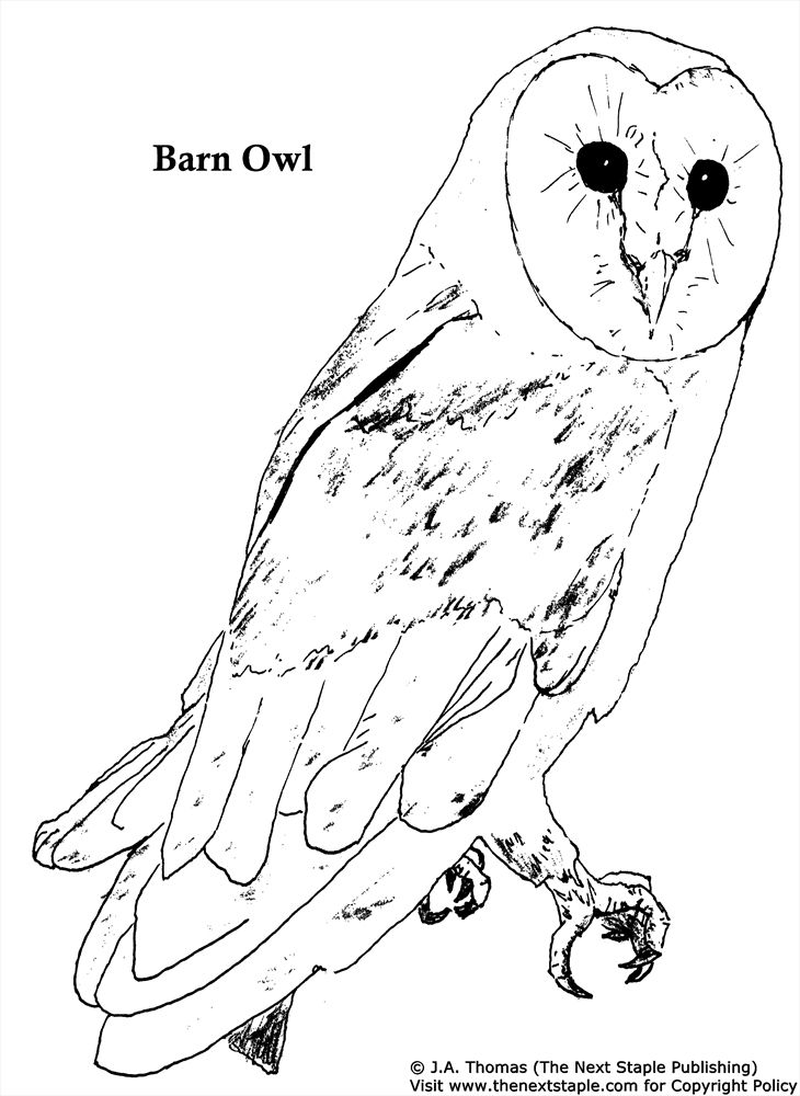 coloring pages of barn owls - photo#2