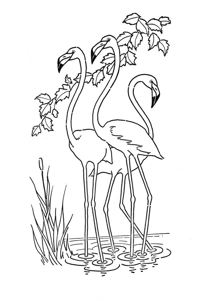 coloring pages of flamingos | Flamingo Christmas Coloring Coloring Pages