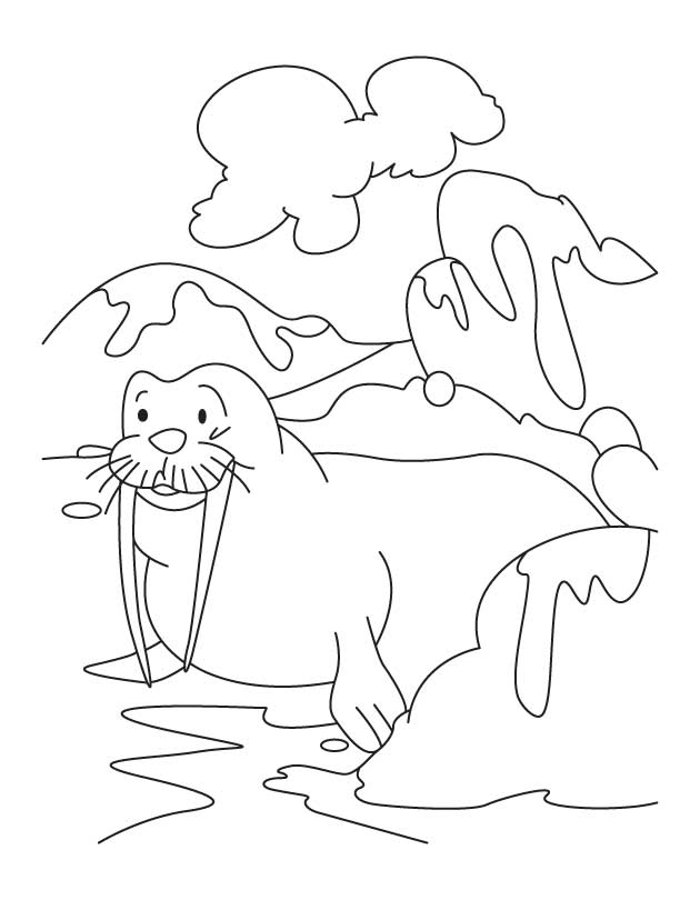 gingde toon dolphin Colouring Pages