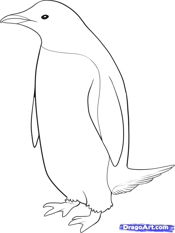 Realistic Birds Az Coloring Pages