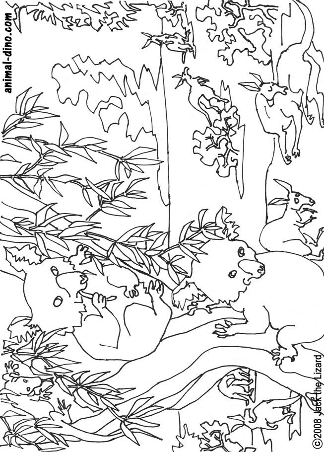 Coloring Pages Of Koala Bears Coloring Home