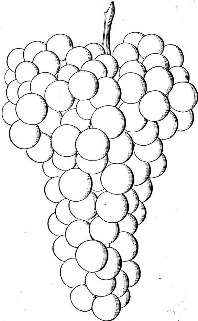 Free Coloring The Grapes For Kids : New Coloring Pages