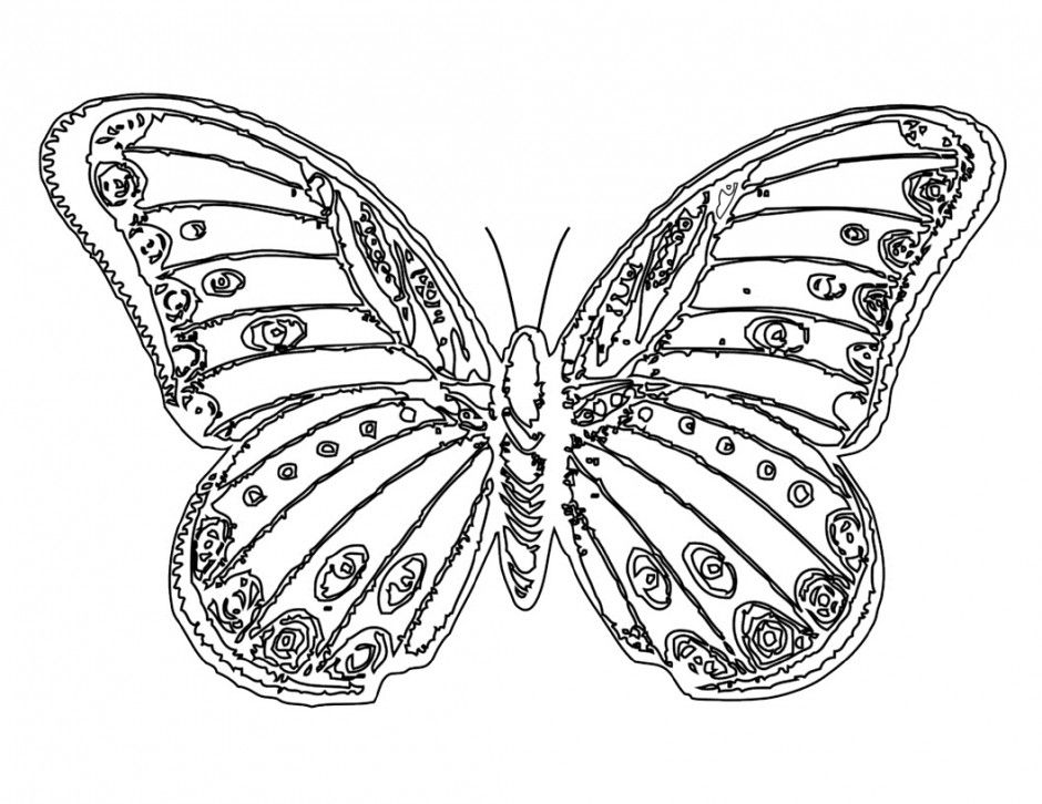 Monarch Butterfly Coloring Pages Coloring Home Monarch Butterfly Coloring Pages