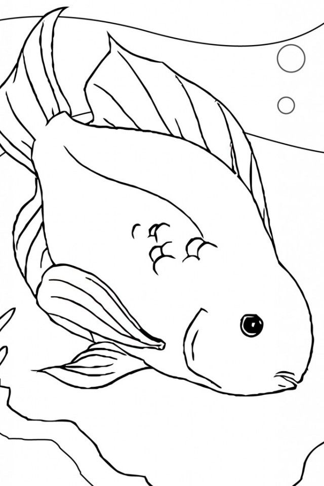 Betta Fish Coloring Page  Coloring Home