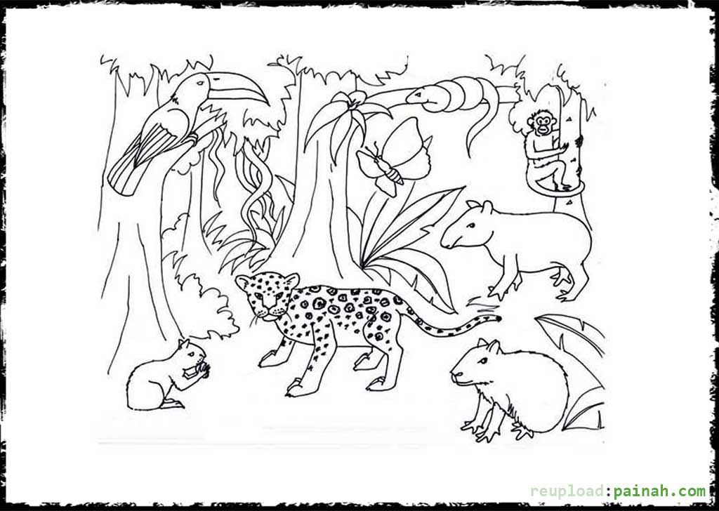 brazilian rainforest animals coloring pages - photo #16