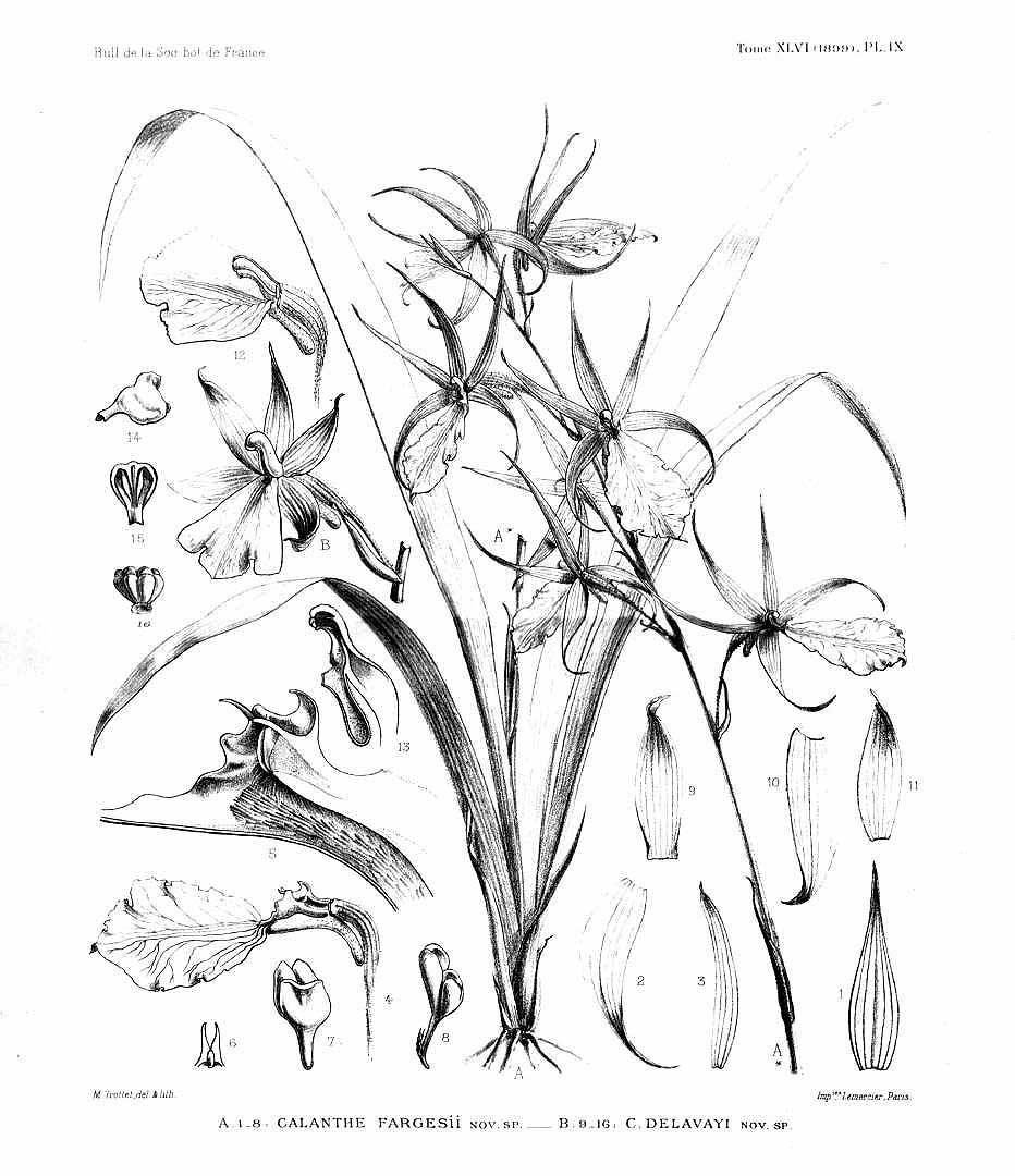 botany coloring pages - photo#13
