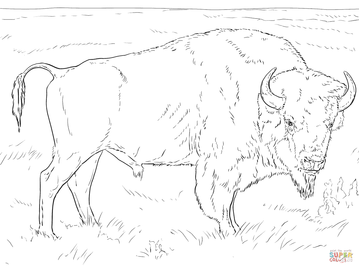 Buffalo coloring pages | Free Coloring Pages
