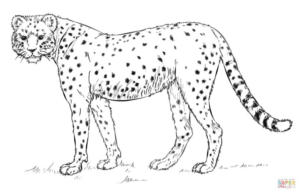 African Cheetah Coloring Page | Free Printable Coloring Pages ...