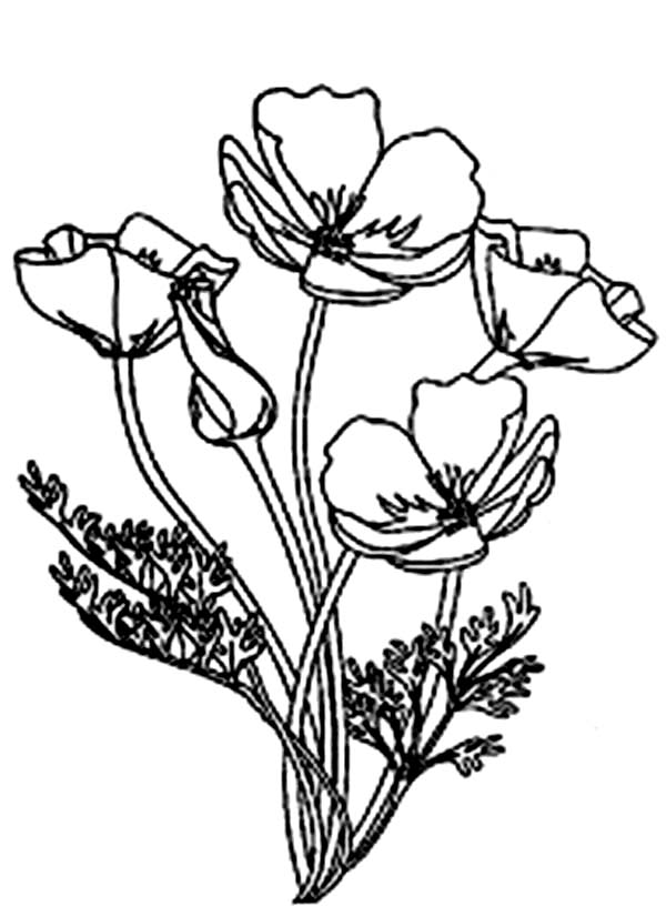 Poppy Coloring Pages For Kids Coloring Home
