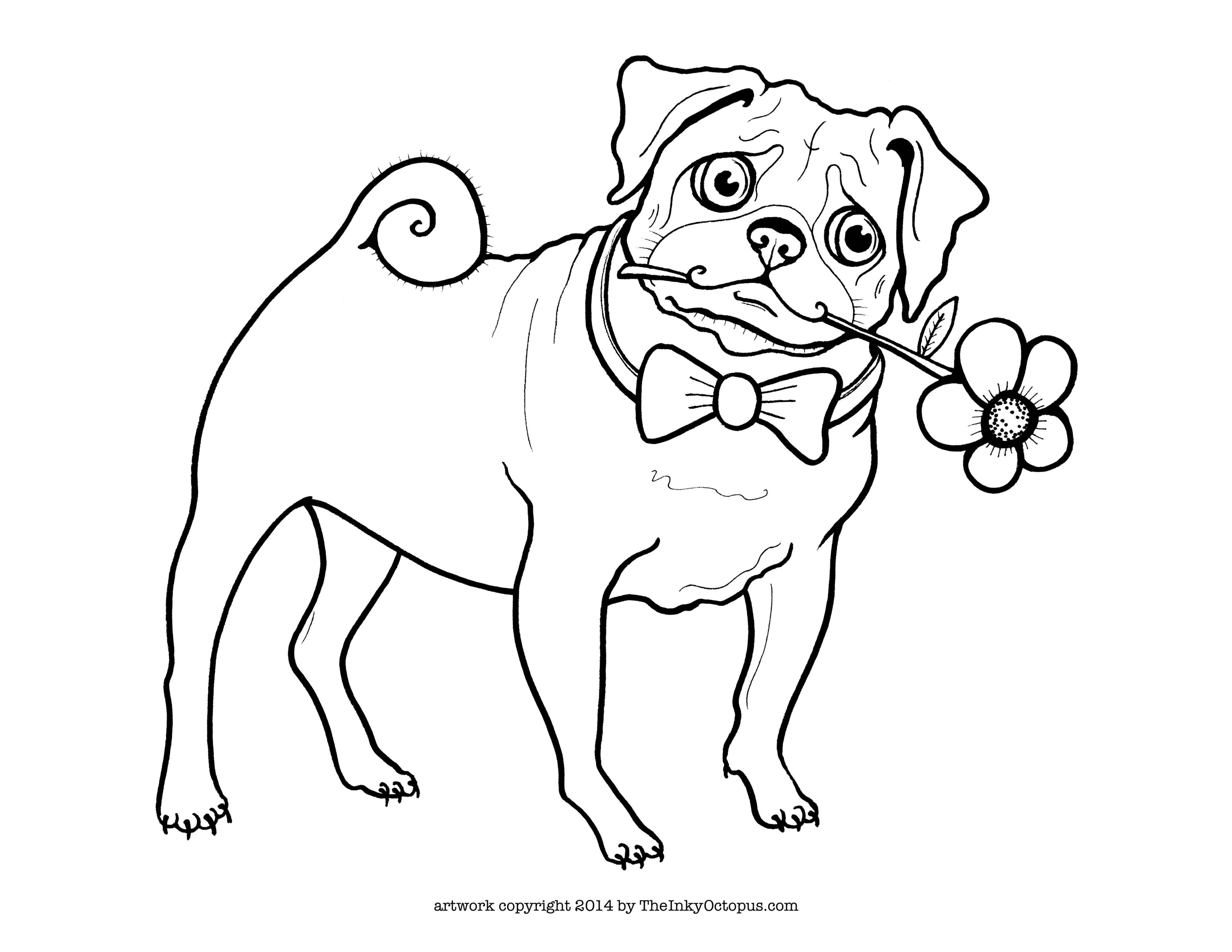 Printable Pug Coloring Page - The Inky Octopus